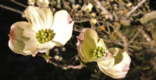 fleurs camping le village des meuniers bourgogne